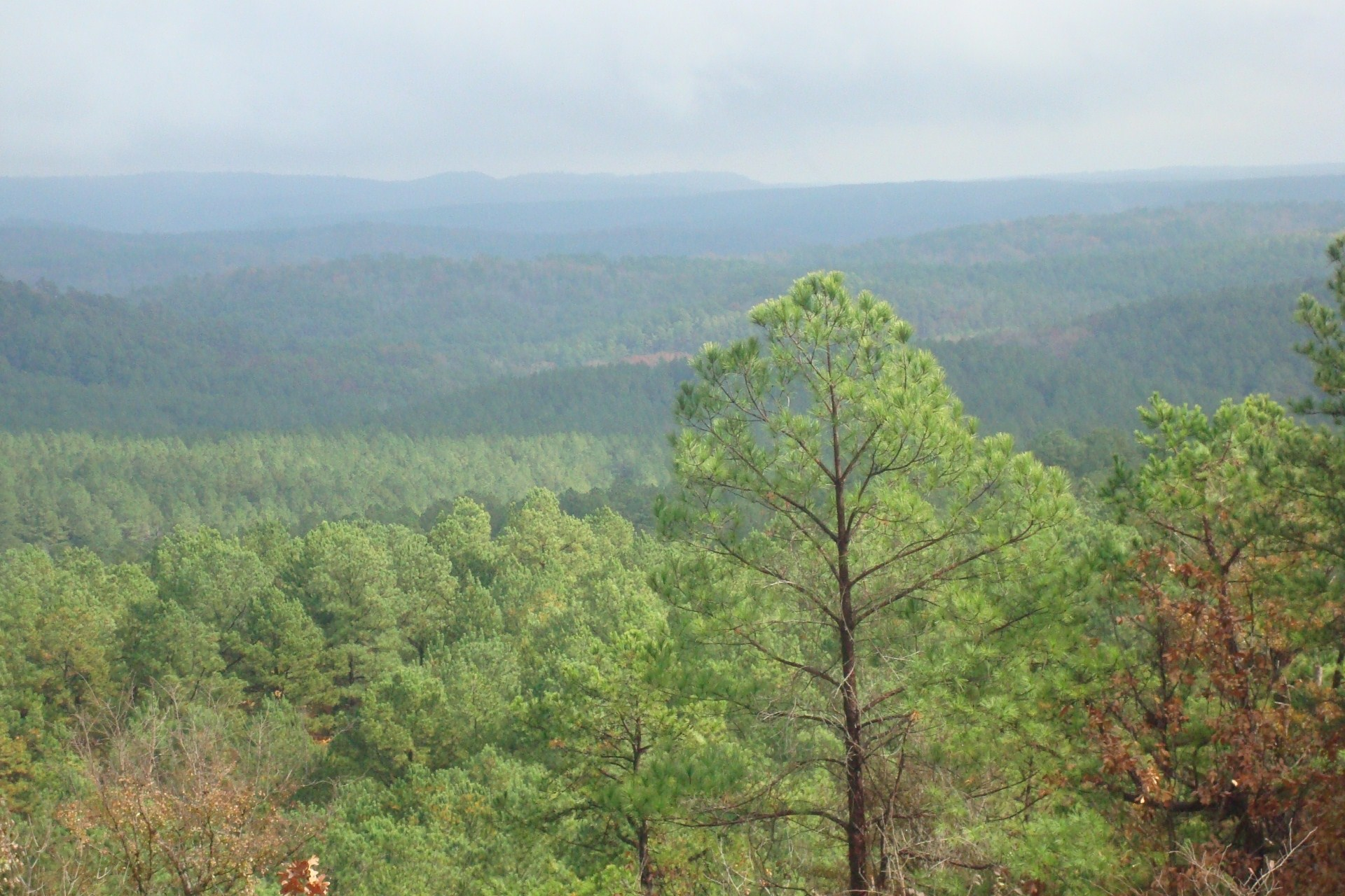 Kiamichi Mountains Surrounding Pine Knot Cabins